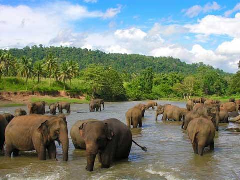shrilanka-480x360